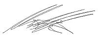 Signature M. Mika